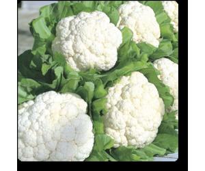 Cauliflower F1 Hybrid - Seeds