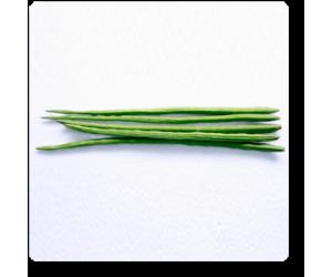 Drumstick, Moringa Oleifera - Seeds