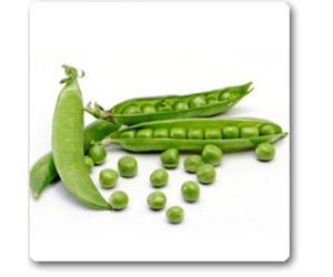 Peas Imported OS 10 - Seeds