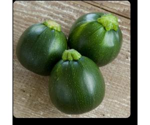 Zucchine Round Tondo Green - Seeds